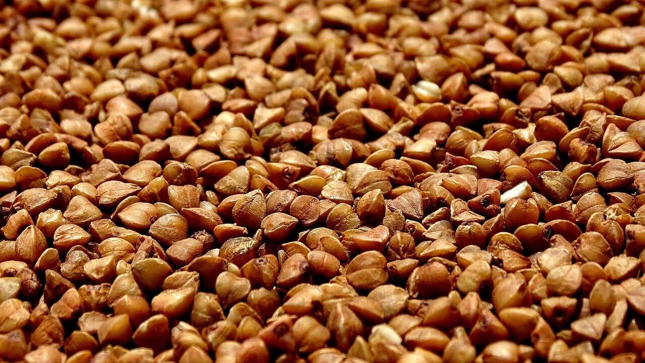 buckwheat-3478557_1280