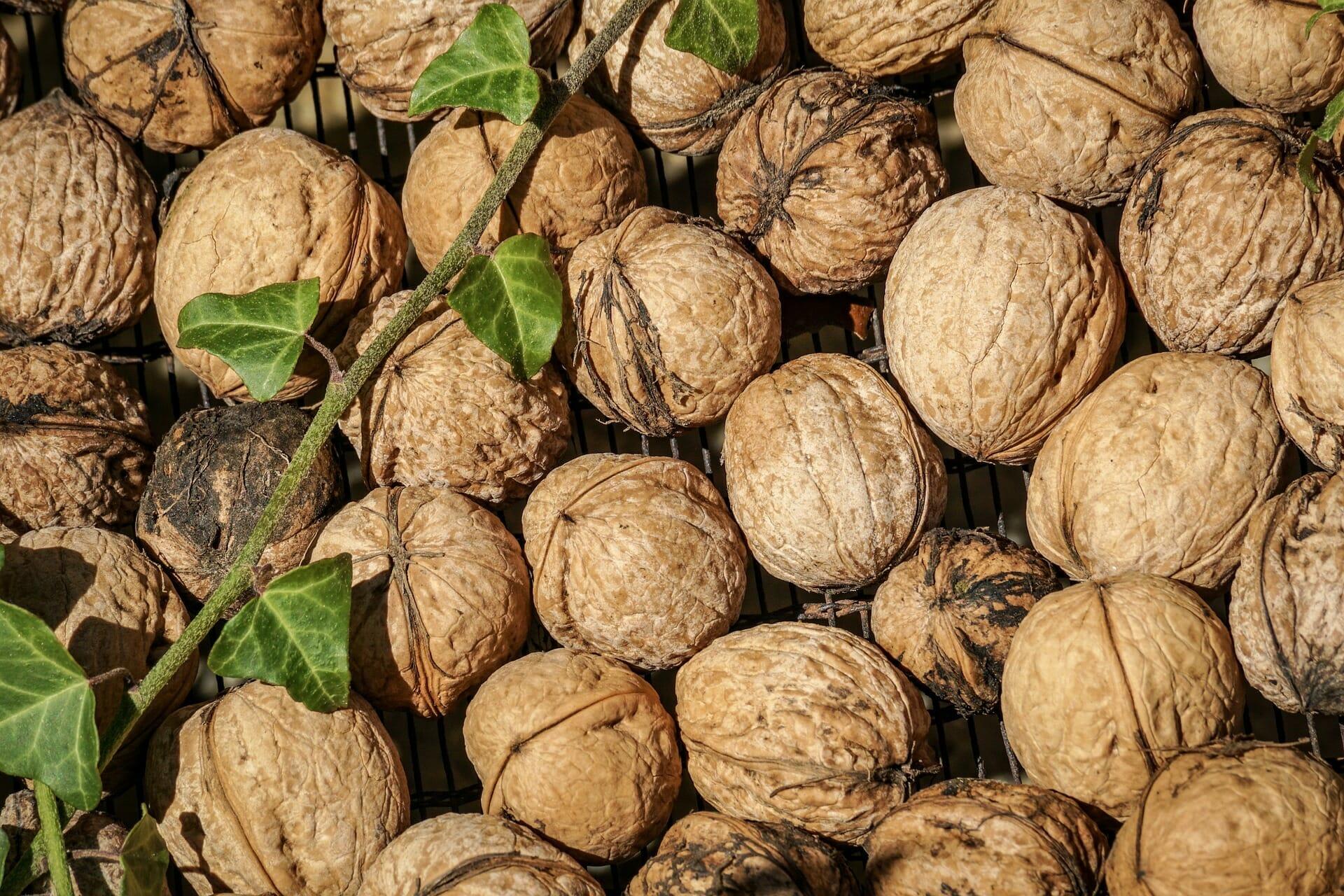 nuts-3747483_1920